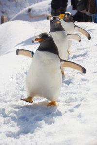 おたる水族館の冬期営業が始まりました